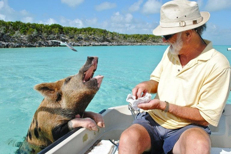 Pig Island is a Snorting Good Place to Go on a Transformative, Tropical Vacation